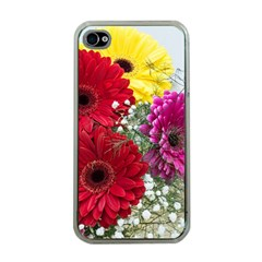 Flowers Gerbera Floral Spring Apple Iphone 4 Case (clear) by Nexatart