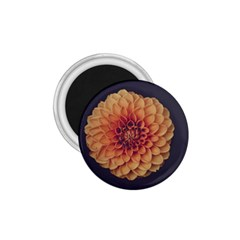 Art Beautiful Bloom Blossom Bright 1 75  Magnets by Nexatart