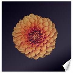 Art Beautiful Bloom Blossom Bright Canvas 12  X 12   by Nexatart