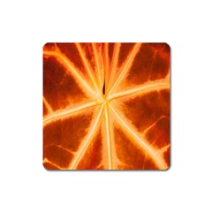 Red Leaf Macro Detail Square Magnet by Nexatart