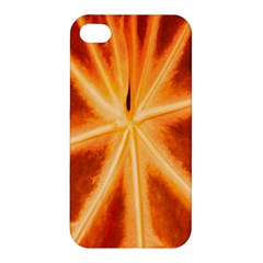 Red Leaf Macro Detail Apple Iphone 4/4s Premium Hardshell Case
