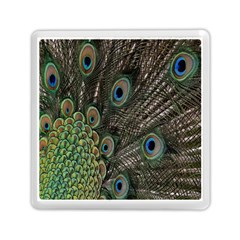Close Up Of Peacock Feathers Memory Card Reader (square)