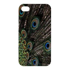 Close Up Of Peacock Feathers Apple Iphone 4/4s Hardshell Case by Nexatart