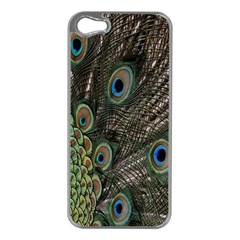 Close Up Of Peacock Feathers Apple Iphone 5 Case (silver) by Nexatart
