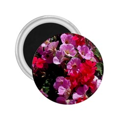 Wonderful Pink Flower Mix 2 25  Magnets