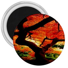 Maple Tree Nice 3  Magnets by BangZart