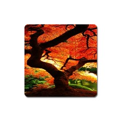 Maple Tree Nice Square Magnet by BangZart