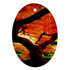 Maple Tree Nice Oval Ornament (two Sides) by BangZart