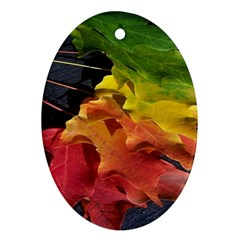 Green Yellow Red Maple Leaf Ornament (oval) by BangZart