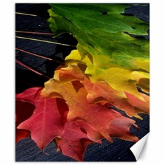 Green Yellow Red Maple Leaf Canvas 20  X 24   by BangZart