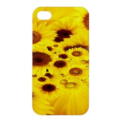Beautiful Sunflowers Apple Iphone 4/4s Hardshell Case