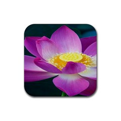 Pink Lotus Flower Rubber Square Coaster (4 Pack)  by BangZart
