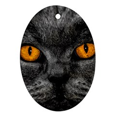 Cat Eyes Background Image Hypnosis Ornament (oval)