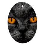 Cat Eyes Background Image Hypnosis Ornament (Oval) Front