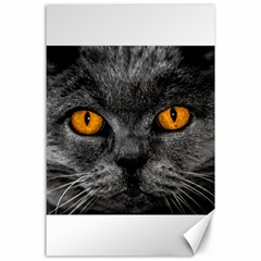 Cat Eyes Background Image Hypnosis Canvas 24  X 36  by BangZart