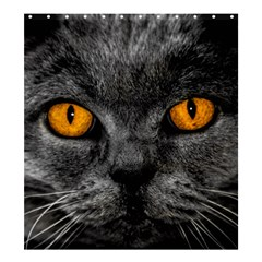 Cat Eyes Background Image Hypnosis Shower Curtain 66  X 72  (large)  by BangZart