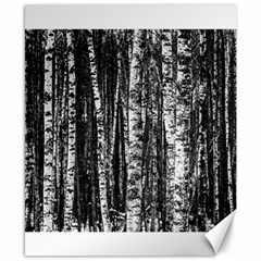 Birch Forest Trees Wood Natural Canvas 8  X 10  by BangZart