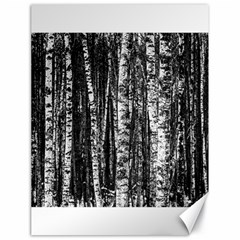 Birch Forest Trees Wood Natural Canvas 18  X 24   by BangZart