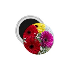 Flowers Gerbera Floral Spring 1 75  Magnets by BangZart