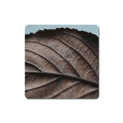 Leaf Veins Nerves Macro Closeup Square Magnet by BangZart