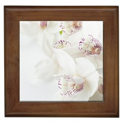 Orchids Flowers White Background Framed Tiles by BangZart