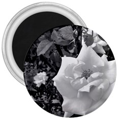 White Rose Black Back Ground Greenery ! 3  Magnets by CreatedByMeVictoriaB