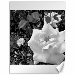 White Rose Black Back Ground Greenery ! Canvas 12  X 16