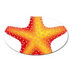 Starfish Oval Magnet by BangZart