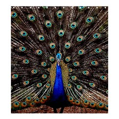 Peacock Shower Curtain 66  X 72  (large)  by BangZart