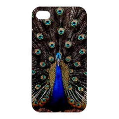 Peacock Apple Iphone 4/4s Hardshell Case by BangZart