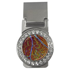 Neurobiology Money Clips (cz)  by BangZart