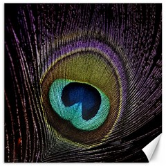 Peacock Feather Canvas 20  X 20   by BangZart