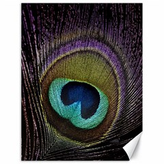 Peacock Feather Canvas 18  X 24