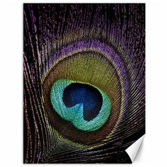 Peacock Feather Canvas 36  X 48   by BangZart
