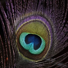 Peacock Feather Magic Photo Cubes by BangZart
