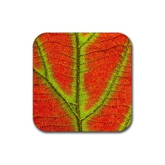 Nature Leaves Rubber Coaster (square)  by BangZart