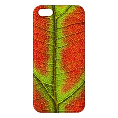Nature Leaves Apple Iphone 5 Premium Hardshell Case by BangZart