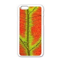 Nature Leaves Apple Iphone 6/6s White Enamel Case