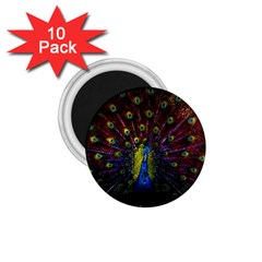 Beautiful Peacock Feather 1 75  Magnets (10 Pack)