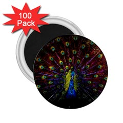 Beautiful Peacock Feather 2 25  Magnets (100 Pack)