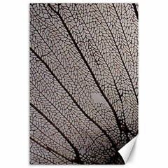 Sea Fan Coral Intricate Patterns Canvas 24  X 36  by BangZart
