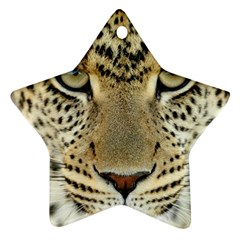 Leopard Face Ornament (star) by BangZart