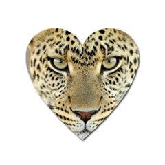Leopard Face Heart Magnet by BangZart