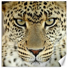Leopard Face Canvas 12  X 12