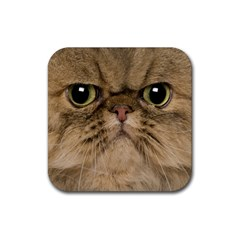 Cute Persian Catface In Closeup Rubber Square Coaster (4 Pack)  by BangZart
