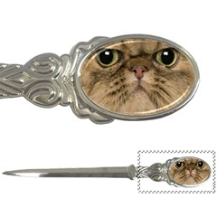 Cute Persian Catface In Closeup Letter Openers by BangZart