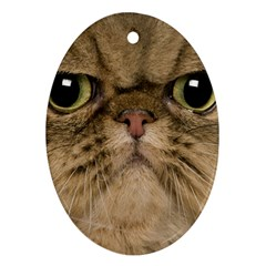 Cute Persian Catface In Closeup Oval Ornament (two Sides) by BangZart