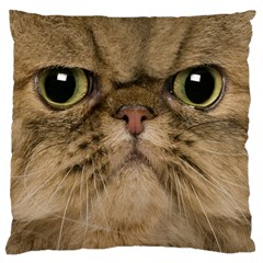 Cute Persian Catface In Closeup Large Cushion Case (one Side) by BangZart