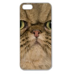 Cute Persian Catface In Closeup Apple Seamless Iphone 5 Case (clear) by BangZart