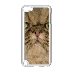Cute Persian Catface In Closeup Apple Ipod Touch 5 Case (white) by BangZart
